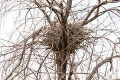 Nest in einem Baum mit bloßen Niederlassungen Lizenzfreies Stockfoto