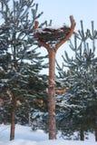Nest eines Storchs Stockfotografie