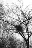 Nest eines Vogels Stockfotos