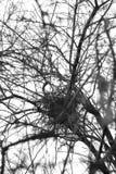 Nest eines Vogels auf einem Baum Lizenzfreies Stockfoto