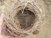 Nest Royalty Free Stock Photo