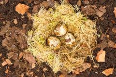 Nest en eieren Stock Afbeeldingen