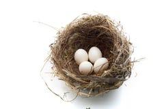 Nest en eieren stock afbeelding