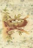 Nest en Vogel de Muurkunst van de Eieren Botanische Uitstekende Stijl met Geweven Achtergrond Royalty-vrije Stock Afbeeldingen