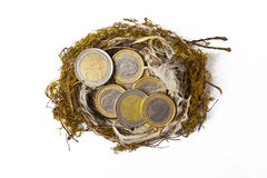 Nest with Euro Coins Stock Photography