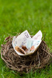 Nest filled with money not eggs Stock Image