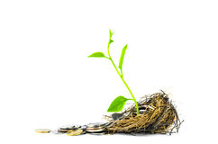 Nest Full of Money for Savings and small tree growth Royalty Free Stock Photo