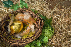 Nest with golden egg Royalty Free Stock Photography