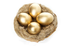 Nest with golden eggs on a white background Stock Images