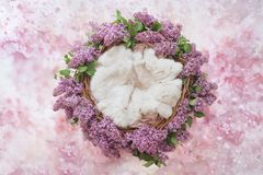 Nest of grapevine and lilac flowers for photographing newborns on a pink floral background. Backdrop royalty free stock photography