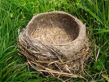 Nest in the grass Stock Image