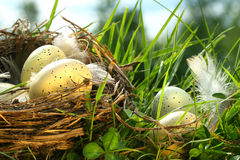 Nest in the grass with eggs Royalty Free Stock Photography