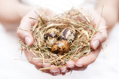 Nest in hands Stock Images