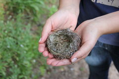 Nest in the hands Royalty Free Stock Photos