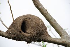 Nest of hornero Royalty Free Stock Photography