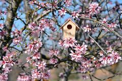 Nest house, in a tree full of almond blossoms
