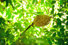 Nest of insects Royalty Free Stock Image