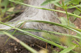 Nest of larvas in the grass Royalty Free Stock Photography