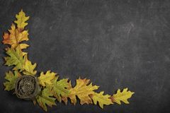 Nest And Leaves Boarder Black Background. Black background with fall leaves and a bird nest forming a boarder royalty free stock image