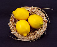 Nest of Lemons Stock Photography
