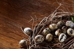 Willow nest with quail eggs on the dark wooden background, top view, close-up, selective focus. Nest made of willow branches full of fresh spotted quail eggs Stock Image