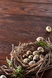 Willow nest with quail eggs on the dark wooden background, top view, close-up, selective focus. Nest made of willow branches full of fresh spotted quail eggs Stock Photo