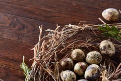 Willow nest with quail eggs on the dark wooden background, top view, close-up, selective focus. Nest made of willow branches full of fresh spotted quail eggs Royalty Free Stock Images