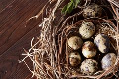 Willow nest with quail eggs on the dark wooden background, top view, close-up, selective focus. Nest made of willow branches full of fresh spotted quail eggs Stock Photos