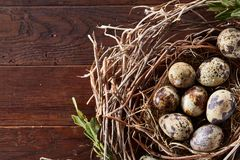 Willow nest with quail eggs on the dark wooden background, top view, close-up, selective focus. Nest made of willow branches full of fresh spotted quail eggs Stock Photography