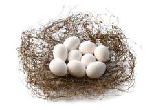 Nest met de eieren van de vogel Stock Foto