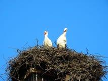 Nest met de ooievaars Stock Fotografie