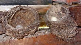 Nest met eieren Stock Foto's