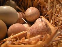 Nest met eieren Stock Afbeelding