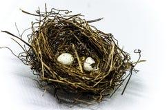 Nest met eieren Stock Foto
