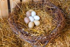 Nest met kippeneieren stock afbeeldingen