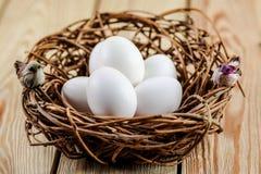 Nest met witte eieren en vogels Royalty-vrije Stock Afbeelding