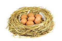 Nest mit Brown-Hühnereien und Pen Isolated auf Weiß Stockbilder