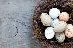 Nest mit Eiern Stockfoto