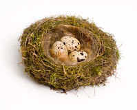 Nest mit Eiern Stockfotos