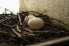 Nest mit Eiern Stockbilder