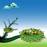 Nest mit Eiern Lizenzfreie Stockbilder