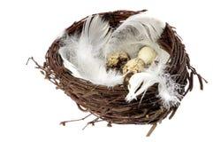 Nest mit Eiern und Federn Lizenzfreie Stockfotografie
