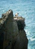 Nest mit einer Ansicht Stockfoto