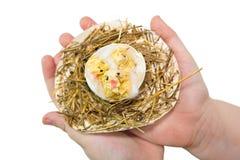 Nest mit Hühnern in den Händen Lizenzfreie Stockfotos