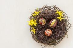 Nest mit kleinen Eiern stockfotografie