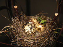 Nest mit Wachteleiern stockfoto