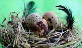 Nest mit Wachteleiern und -federn auf hellgrünem Hintergrund lizenzfreie stockbilder