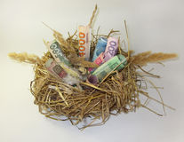 Nest and money. Royalty Free Stock Photo