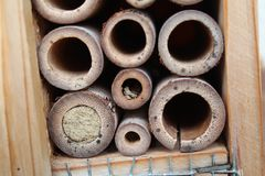 Native bees. Nest of native bees stock photography