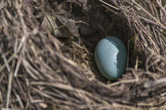 Nest Royalty Free Stock Images
